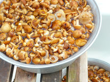 Fresh mushrooms Stock Photos