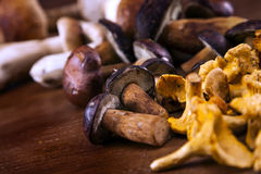 Fresh mushrooms closeup Royalty Free Stock Photography