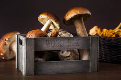 Fresh mushrooms Royalty Free Stock Image