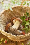 Fresh mushrooms and cranberry in basket Royalty Free Stock Photography