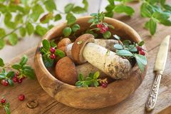 Fresh mushrooms with cranberry in wooden bowl royalty free stock images