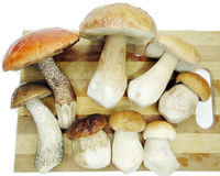 Fresh mushrooms on cutting board Stock Image