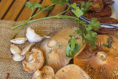 Fresh mushrooms. Freshly picked from the forest, wiyh dry tomatos and some garlics on rustic table cloth and wooden table Royalty Free Stock Images