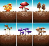 Fresh mushrooms growing in the ground Royalty Free Stock Photos