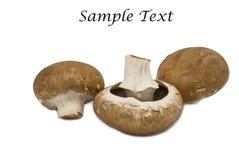 Fresh mushrooms  isolated on white background Stock Photography
