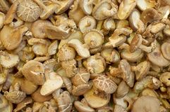 Fresh mushrooms at the local market.  Royalty Free Stock Photo