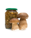 Fresh mushrooms and marinated mushrooms in the glass jar. white Royalty Free Stock Images