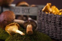 Fresh mushrooms on moss Royalty Free Stock Photo