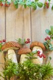 Fresh mushrooms with moss and cranberry Royalty Free Stock Image