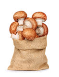 Fresh mushrooms mushrooms in a bag of sackcloth isolated on a wh Royalty Free Stock Photos