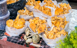 Fresh mushrooms of new harvest ready to sale Stock Images