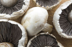 Fresh mushrooms Royalty Free Stock Photo
