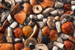 Fresh mushrooms Stock Photo
