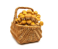 Fresh mushrooms in a wicker basket isolated on white background Royalty Free Stock Images