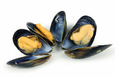 Fresh mussel Royalty Free Stock Photos