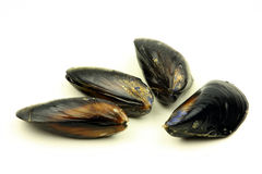 Fresh mussel Royalty Free Stock Photo