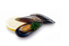 Fresh mussel Stock Image