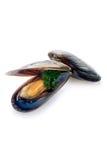 Fresh mussel Stock Photos