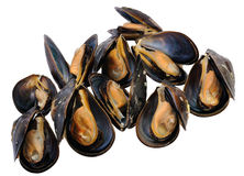Fresh  mussel Royalty Free Stock Images