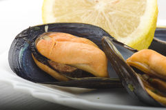 Fresh mussel close up. Fresh mussel cooked close up on the white plate Royalty Free Stock Images