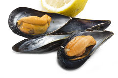 Fresh mussel cooked. Close up on the white plate Royalty Free Stock Image