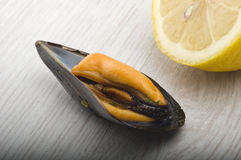 Fresh mussel cooked. Close up on the white plate Stock Photography