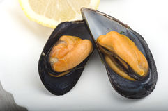 Fresh mussel cooked. Close up on the white plate Stock Photo
