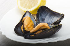 Fresh mussel cooked. Close up on the white plate Stock Image