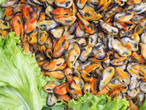 Fresh mussel, seafood ingredient Royalty Free Stock Images