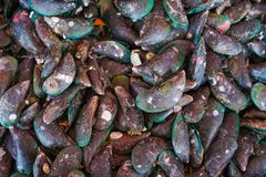 Fresh mussel from seafood store royalty free stock photography
