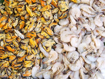 Fresh mussel and shrimp Stock Image