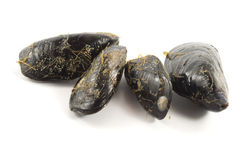 Fresh mussel on white Royalty Free Stock Photos