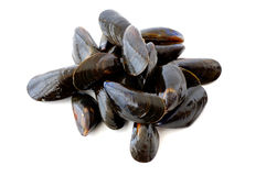 Fresh mussel on white background royalty free stock photos