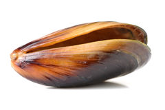 Fresh mussel Royalty Free Stock Photography