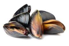 Fresh mussel Stock Image