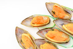 Fresh mussel on white background . Royalty Free Stock Image