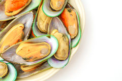 Fresh mussel on white background . Royalty Free Stock Photos