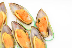 Fresh mussel on white background . Stock Images