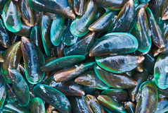 Fresh Mussels Stock Images