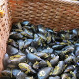 Fresh mussels. In the wicker basket Royalty Free Stock Image