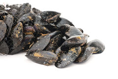 Fresh mussels. Basket with fresh mussels over white background Royalty Free Stock Images