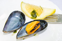 Fresh mussels Stock Photos