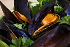 Fresh mussels braised in white wine Stock Image