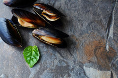 Fresh mussels. Copyspace for text. Royalty Free Stock Photo