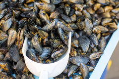 Fresh mussels on fish farmer market in Provence Stock Photos