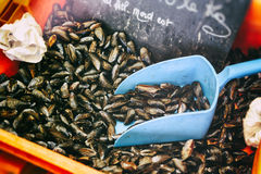 Fresh mussels at fish market Royalty Free Stock Image