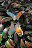 Fresh mussels. At the fish market in Thailand Royalty Free Stock Photo