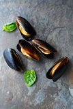 Fresh mussels on gray rock Stock Photos