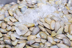Fresh mussels on ice exposition at the seafood market in Thailan. D. Display of clams for sale Royalty Free Stock Photos