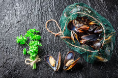 Fresh mussels on ice with ingredients Royalty Free Stock Photos